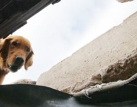 Chief the dog searches amongst the rubble.