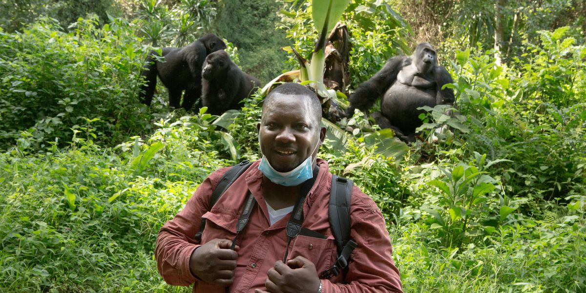 Dr. Basabose poses in front of silverback gorillas.