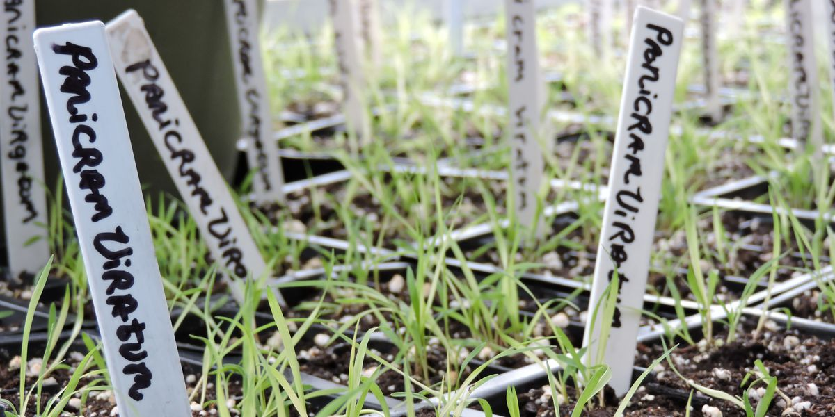 seedlings in a greenhouse closeup