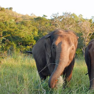 Two elephants in jungle
