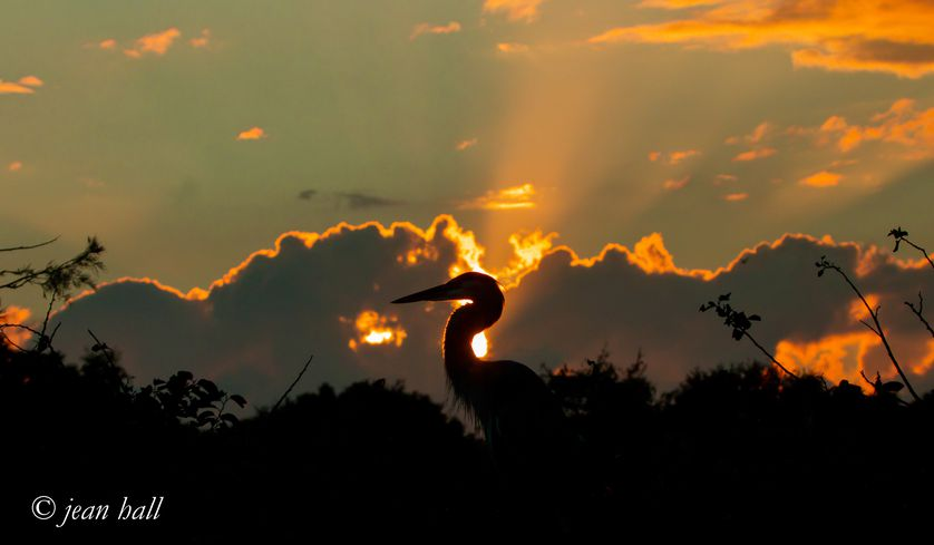 A stork in the wetlands