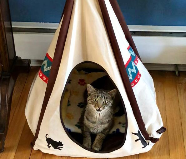 Kitty pokes out of teepee