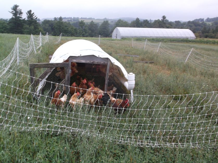 A chicken coop on a family farm