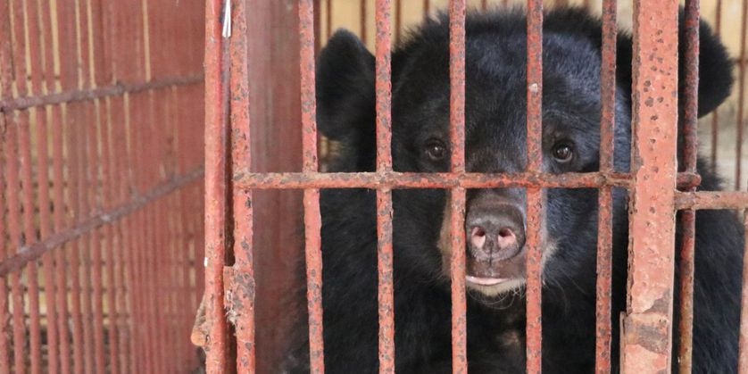 bear in cage with bars