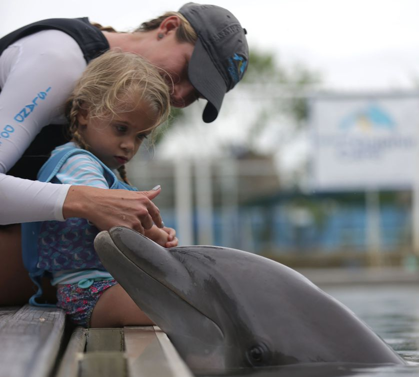trainer with kid and dolphin