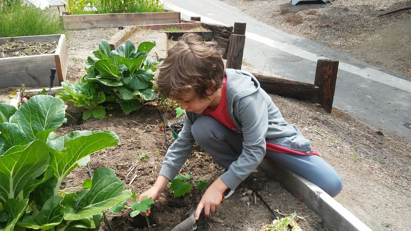 little boy tends to garden