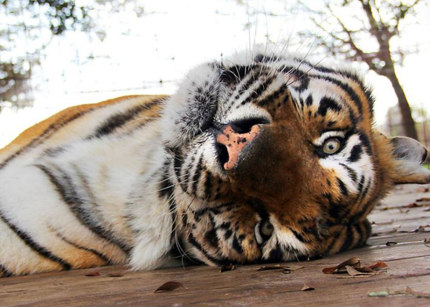 A new life for rescued exotic cats | CommonGood