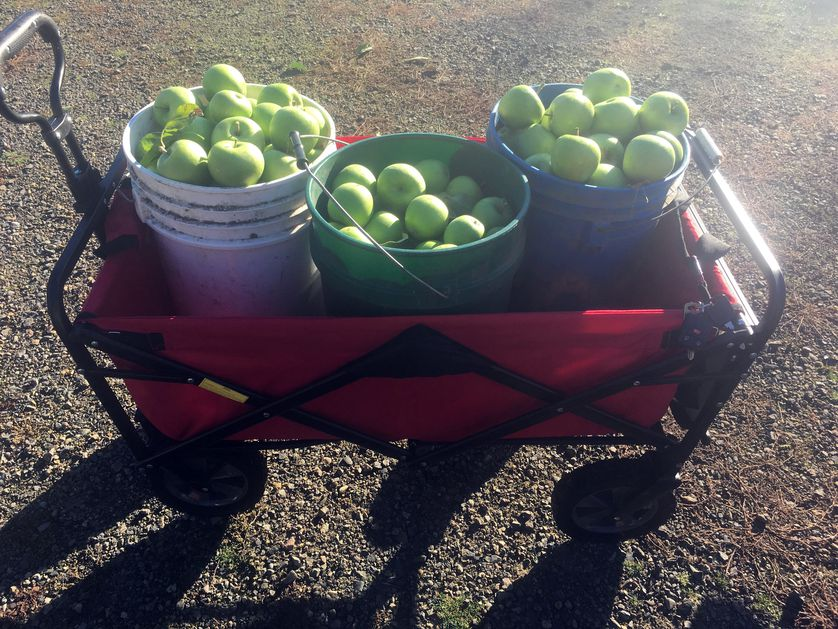 Cart with apples