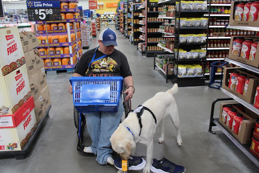 dog helps person in wheelchair pick up shoe