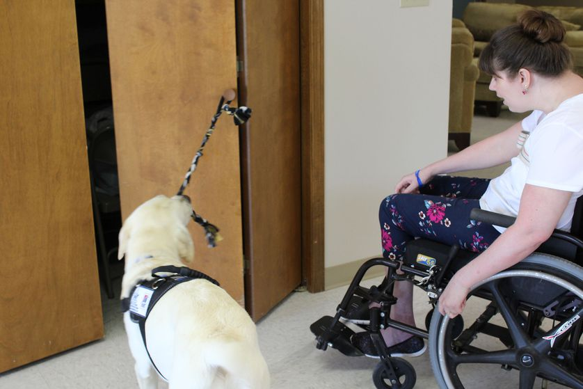 guide dog opens door for disabled person